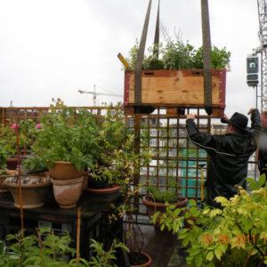 Divers - Jardin sur toiture