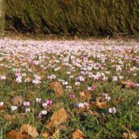 Plantations, Plantes annuelles, bisannuelles, vivaces, d'intérieurs | Arbustes | Arbres d'ornement | Arbres fruitiers